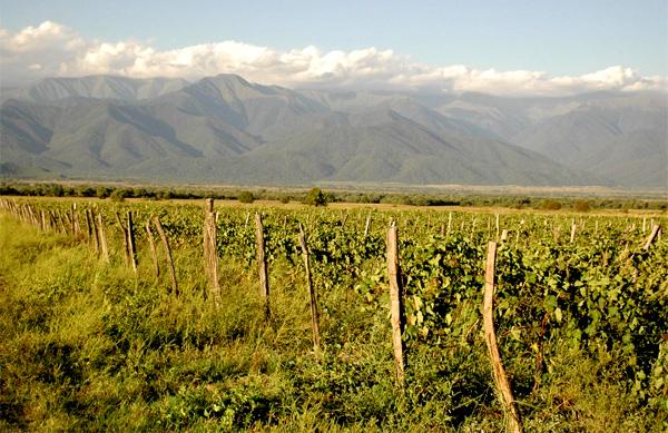 winnica w regionie kachetii