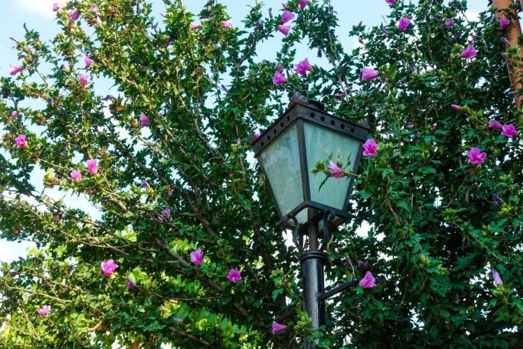latarnia Gruzja Mccheta miasto