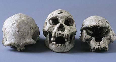 czaszki znalezione w dmanisi, gruzja