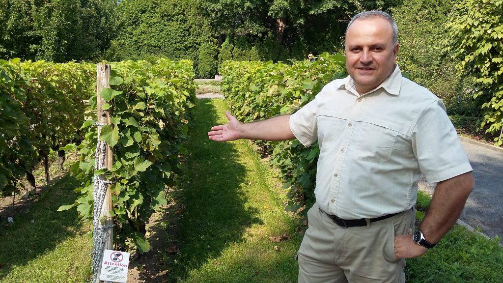 winiarnia w gruzji