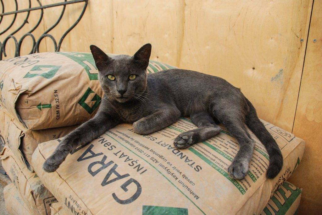 Bakijskie koty