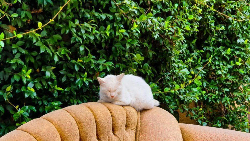wloskie podworka drewniana zabudowa tarasow balkon tbilisi wloskie podworka koty