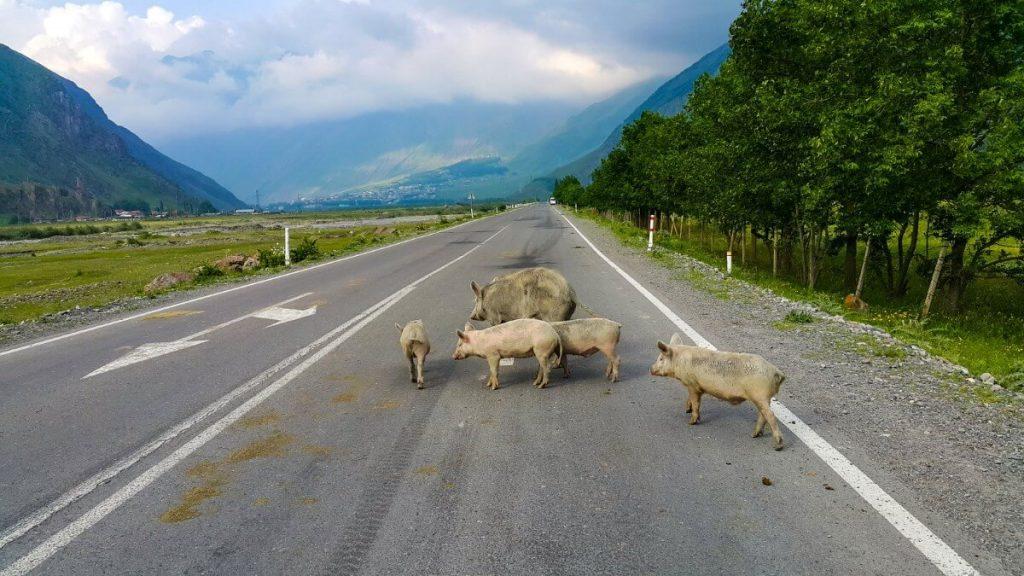 Gruzinska Droga Wojenna