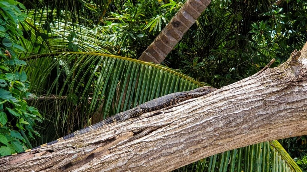 Sri Lanka fauna i flora rejs po madu river dzungla gady