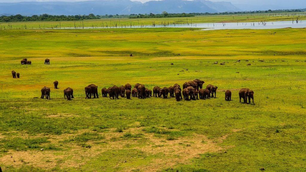 slonie park narodowy udawalawa sri lanka