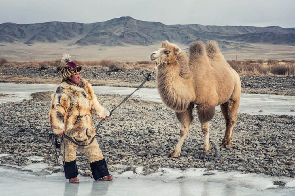 mongolia wielbłąd baktrian